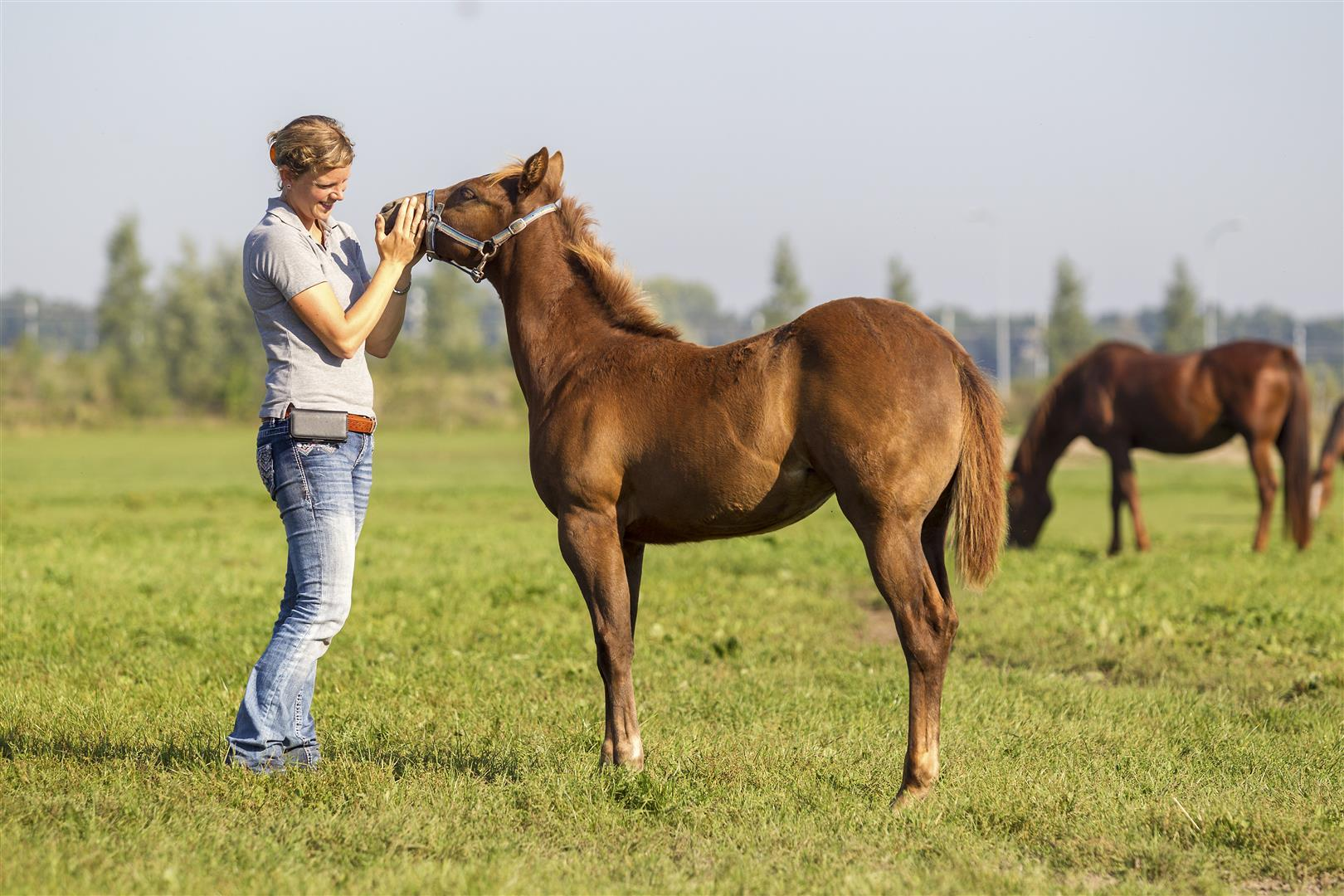 mare and foal center