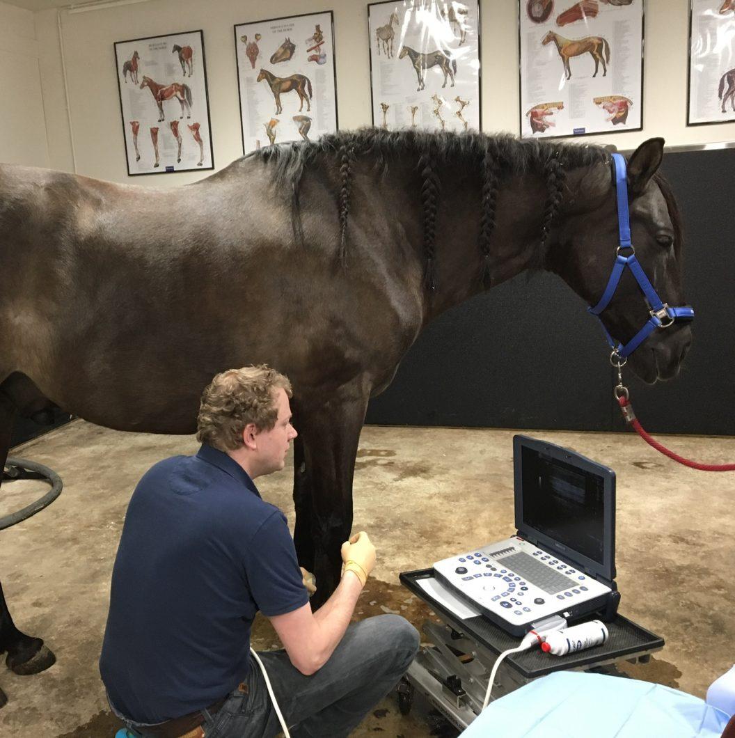 scan pees paard