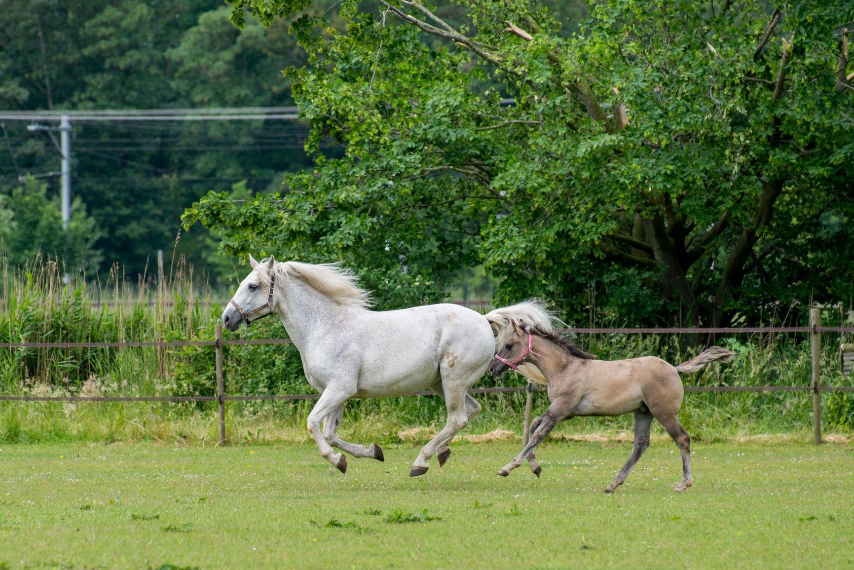 rearing foal