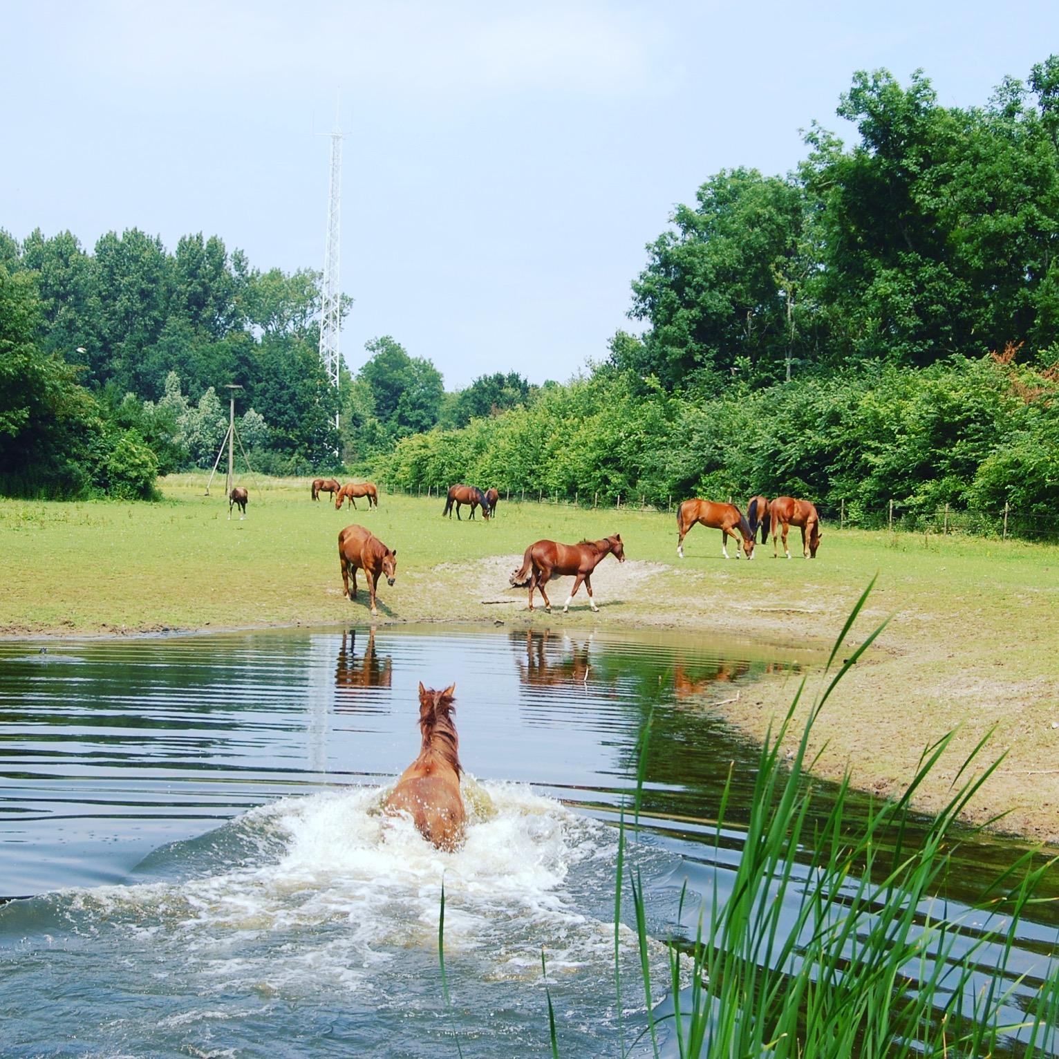Rearing foals